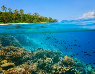 Coral reef in tropical sea on a background of green island