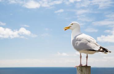 seagull over sea and blue sky
