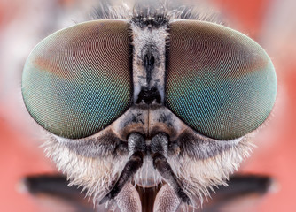 fly macro insect nature animal eye bug close small wildlife head portrait color sharp