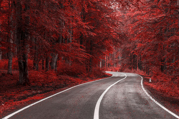 Jesieni droga przez czerwieni opuszcza las