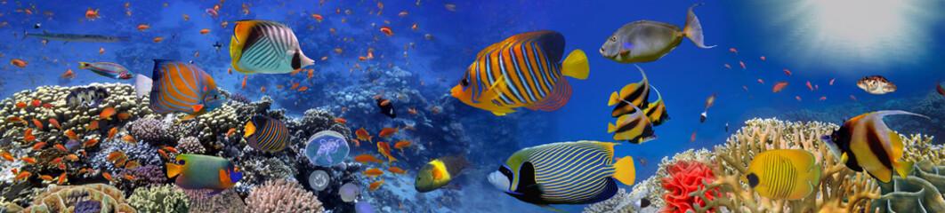 Bądź koralowcami. Panorama