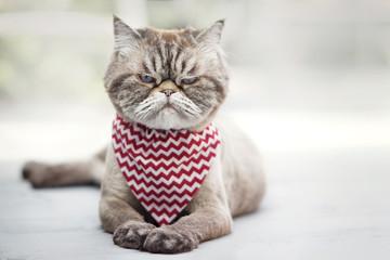 Zły kot