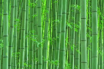 静寂の竹林