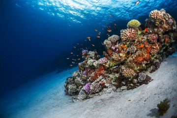 Underwater shot of the sea floor and vivid coral reef. Red Sea, Egypt