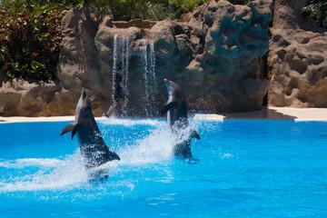 Dolphin show Tenerife
