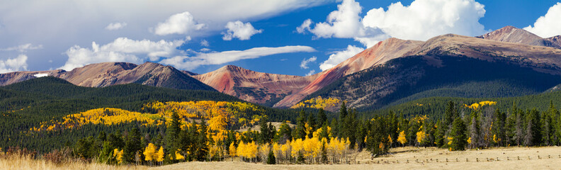 Panoramic Fall Forest of Aspen Trees Landscape in the Colorado Rocky Mountains
