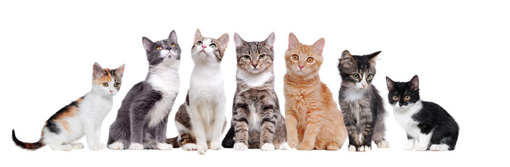 A group of cats sitting in a raw on white background