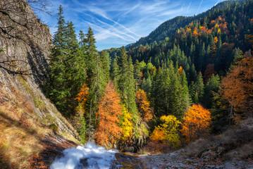 Zadziwiający widok jesień las w Rhodope górach, Bułgaria