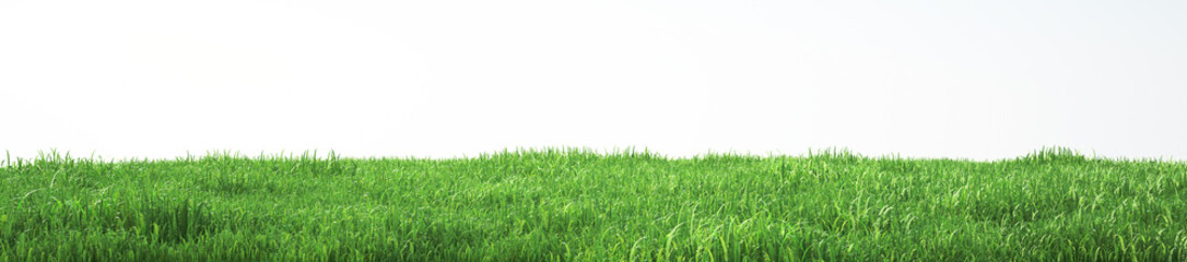 Field of soft grass, perspective view with close-up