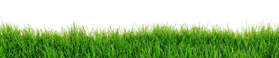 Gras Wiese Rasen