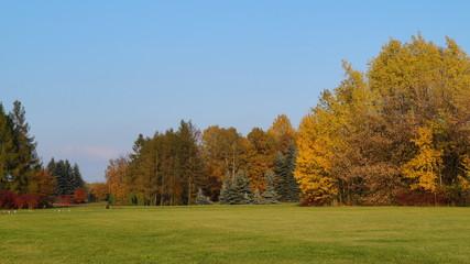 Beautiful colorful autumn - great autumn trees - autumn alley