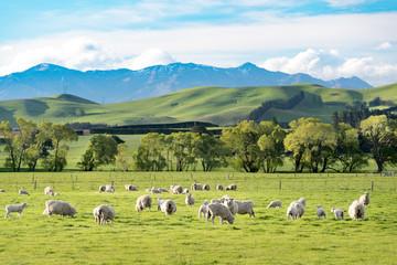 Landscape of NewZealand