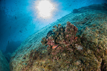 diving in colorful reef underwater in mexico cortez sea