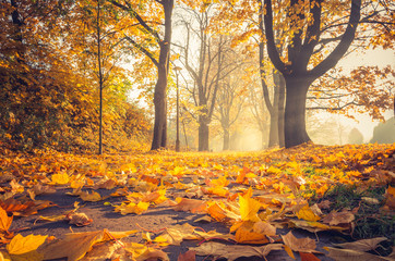 Fallen leaves, autumn colorful park alley in Krakow, Poland