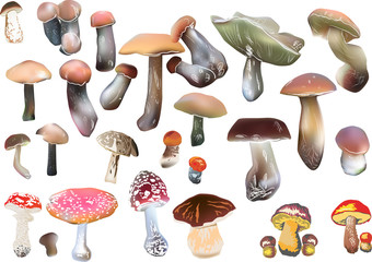 set of color mushrooms on white
