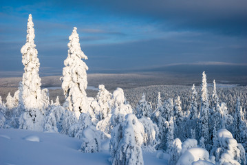 Winter scene view over the snow covered trees of the taiga forest above Ylläs, Lapland, Finland