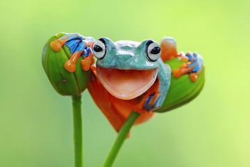 Tree frog smile