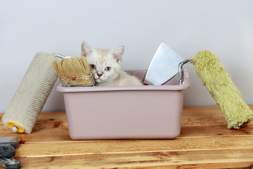 Cute little kitten sitting in washbowl with tools for renovation