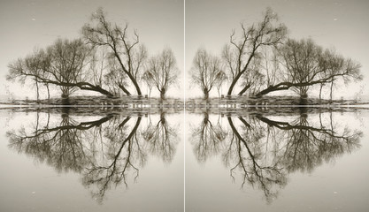 Abstraction from the trunks of trees reflected in water