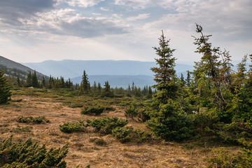 Ural Taiga Coniferous spring wild forest