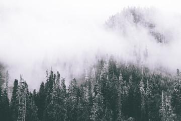 Fog Wisps B&W