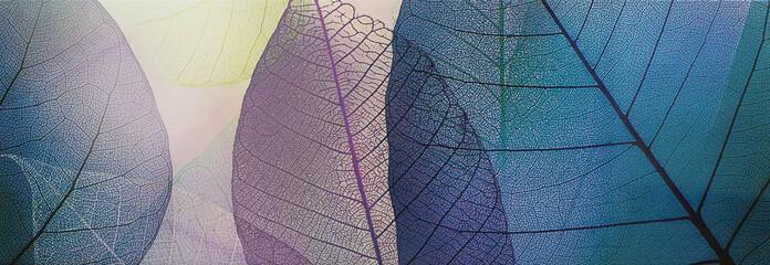 płytki, przezroczyste liście