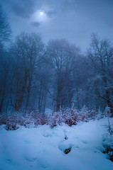 Full moon in foggy winter forest