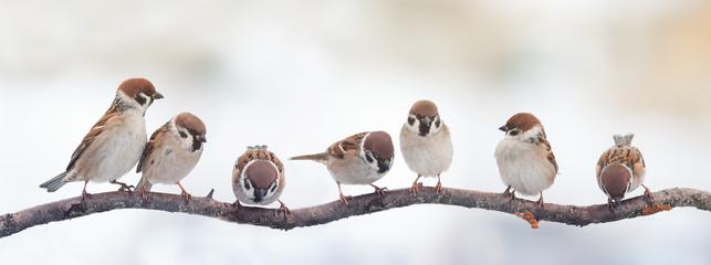 małe wróble śmieszne ptaki siedzą na gałęzi na zdjęciu panoramicznym