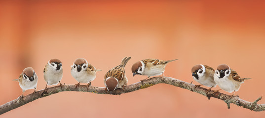 lot of little funny birds sitting on a branch and looking curiously