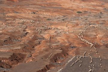 Schaf Herde in karger Landschaft aus Vogelperspektive