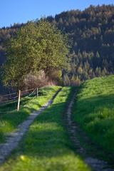 Słoneczny wiosenny dzień w górskim mieście Muszyna. Sunny spring day in the mountain in Muszyna - Poland.