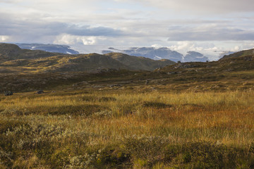 Brown tundra landscape on Hardangervidda plateau against glacier, Norway