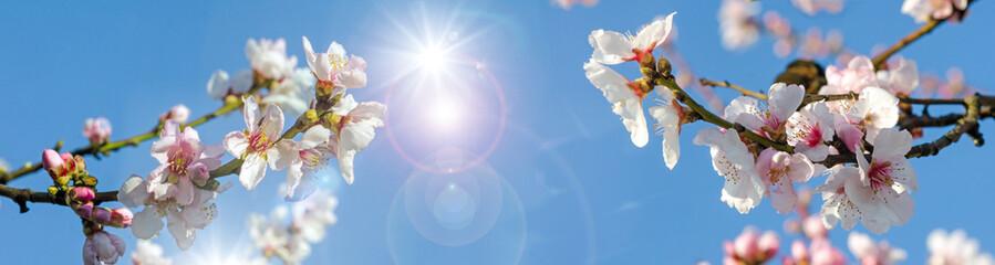 Glückwunsch, alles Liebe: Verträumte Kirschblüten  vor blauem Frühlingshimmel :)