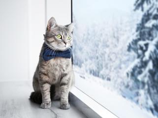 Cute cat on windowsill and beautiful view through window