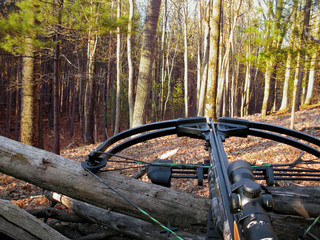 crossbow resting on tree trunk in autumn woods