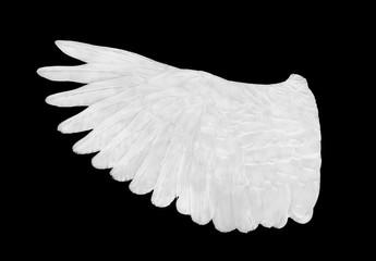 white wing on black blackground
