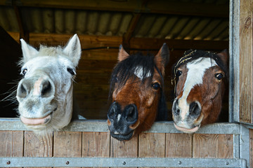Funny horses in their stable