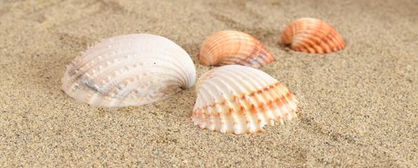Muschel in sand