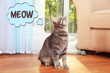 Cute cat at home and word MEOW on background