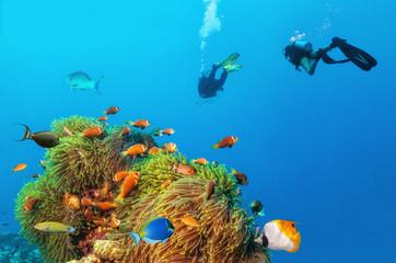 Two scuba divers exploring sea bottom