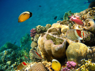 Underwater beach / Fish and corals under water in red sea, Egypt