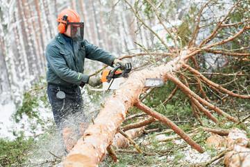 Lumberjack cutting tree in snow winter forest