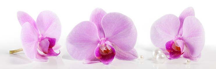 large orchid flowers on a white background. Beautiful floral background