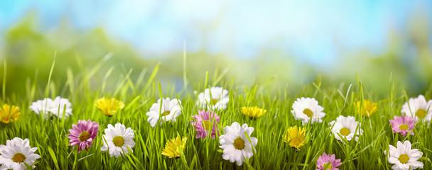 Wiosna kwiat na łące