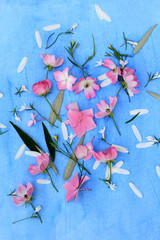 Beautiful floral background with pink roses and hortensia on blue background