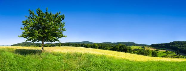 Landschaft mit grüner Wiese und Baum vor blauem Himmel