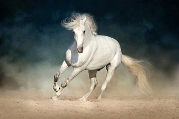 White horse run forward in dust on dark background