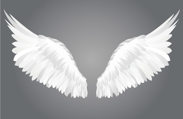 Wings. Vector illustration on grey background.