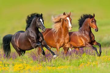 Konie biegną galopem na łące kwiatów