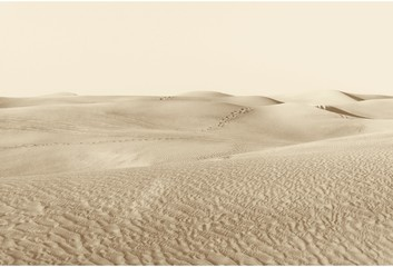 dunes in the desert